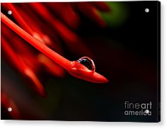 Acrylic Print featuring the photograph  Delicate by Michelle Meenawong