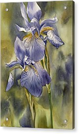 Double Blue Irises Acrylic Print by Alfred Ng