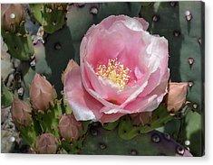 Durango Prickly Pear Acrylic Print