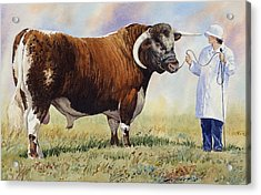 English Longhorn Bull Acrylic Print by Anthony Forster