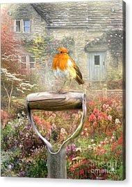 English Robin Acrylic Print