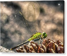 Erythemis Simplicicollis Acrylic Print by Rob Sellers