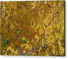 Acrylic Print featuring the photograph  Fall Amur Maple  by J L Zarek