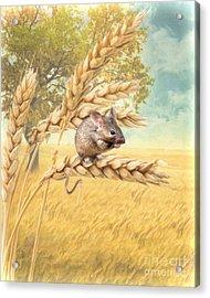 Field Mouse Acrylic Print