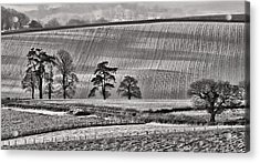 Fields And Trees Acrylic Print