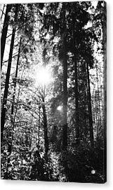 Forest Acrylic Print by Falko Follert