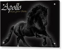 Friesian Stallion Acrylic Print by Royal Grove Fine Art