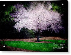Ghostly Spring Acrylic Print by Bobbi Feasel