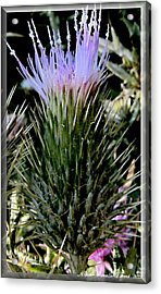 Glowing Purple Thisle Flower Acrylic Print