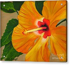 Golden Glow - Hibiscus Flower Acrylic Print by Shelia Kempf