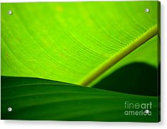 Acrylic Print featuring the photograph  Greens by Michelle Meenawong