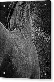 Horse Cool Off Acrylic Print