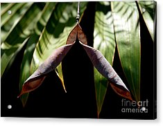 Acrylic Print featuring the photograph  Husk by Michelle Meenawong