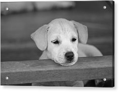 It Was A Hard Day Acrylic Print by Michelle Meenawong