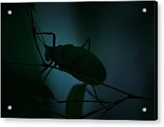 It's A Bug... Acrylic Print by Tammy Schneider