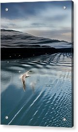 Journey With A Sea Gull Acrylic Print by Gary Warnimont