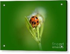 Ladybug Acrylic Print by Michelle Meenawong
