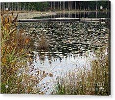 Lily Pads On Whonnock Lake Acrylic Print by Joyce Gebauer