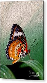 Malay Lacewing Butterfly II Acrylic Print