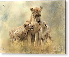 Mamma Acrylic Print