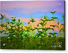 Meadow Magic Acrylic Print