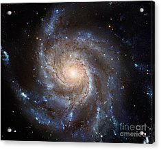 Messier 101 Acrylic Print by Barbara McMahon
