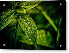 Morning Dew Acrylic Print by Jason Naudi Photography