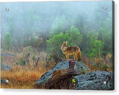Acrylic Print featuring the photograph '' Morning Patrol '' by Kadek Susanto