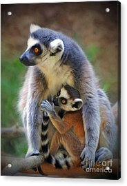 Acrylic Print featuring the photograph    Mother And Baby Monkey by Savannah Gibbs