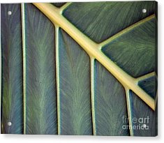 Nervures Acrylic Print by Michelle Meenawong