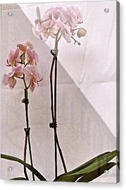 Acrylic Print featuring the photograph  Orchids In The Window by Ira Shander