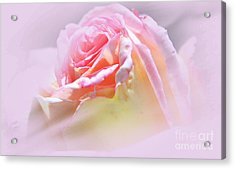 Peaceful Pink Rose Haze Acrylic Print