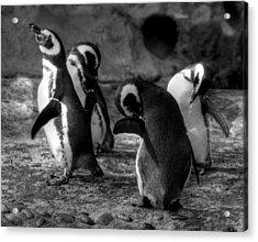 Penguin's Acrylic Print
