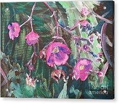 Ptg  Adirondack Wildflower Acrylic Print by Judy Via-Wolff