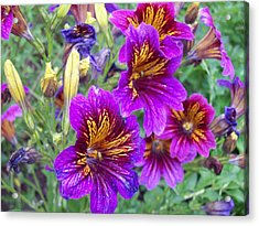 Pucker Up For Purple Acrylic Print