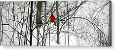 Red Wings In The Woodland Acrylic Print by Dina  Stillwell