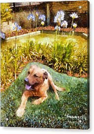 Acrylic Print featuring the painting Alameda Rufus by Linda Weinstock