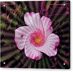 Rippling Pink Acrylic Print