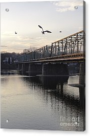 Gulls At The Bridge In January Acrylic Print