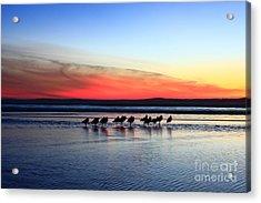 Shorebird Sunset Acrylic Print