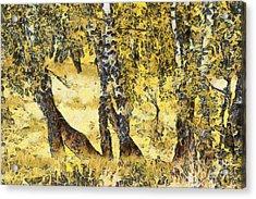 Silver Birch Acrylic Print by Odon Czintos