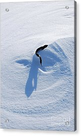 Snow Face Acrylic Print by Joy Bradley