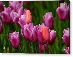 Springtime Treasure Acrylic Print