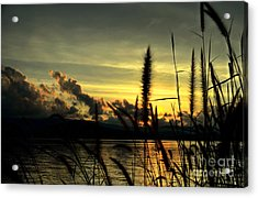 Sunset Acrylic Print by Michelle Meenawong