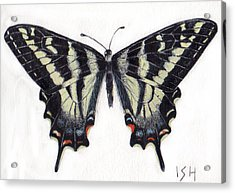 Swallowtail Butterfly  Acrylic Print by Inger Hutton