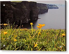 The Cliffs Of Moher Acrylic Print by Will Burlingham