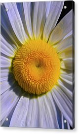Acrylic Print featuring the digital art  The Dainty Daisy by Timothy Hack