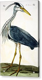 The Heron  Acrylic Print by Peter Paillou
