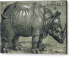 The Rhinoceros Acrylic Print by Albrecht Durer