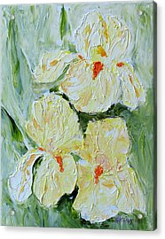 Three Yellow Irises Acrylic Print